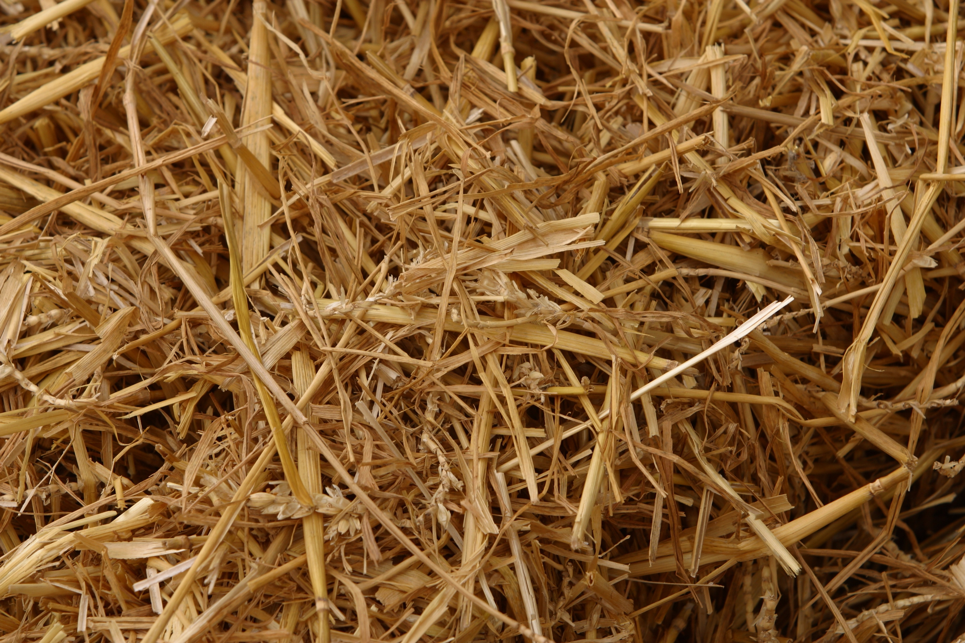Why Put Straw On Grass Seed Home Guides Sf Gate