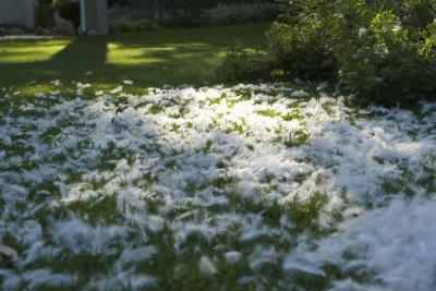 Hongos blancos sobre el c sped ehow en espa ol for Hongos en el cesped jardin