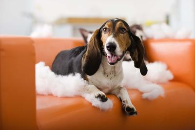 The Best Natural Deterrent To Keep Dogs Away Pets