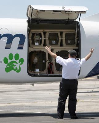 How Much Is An Airline Ticket For Dogs Usa Today