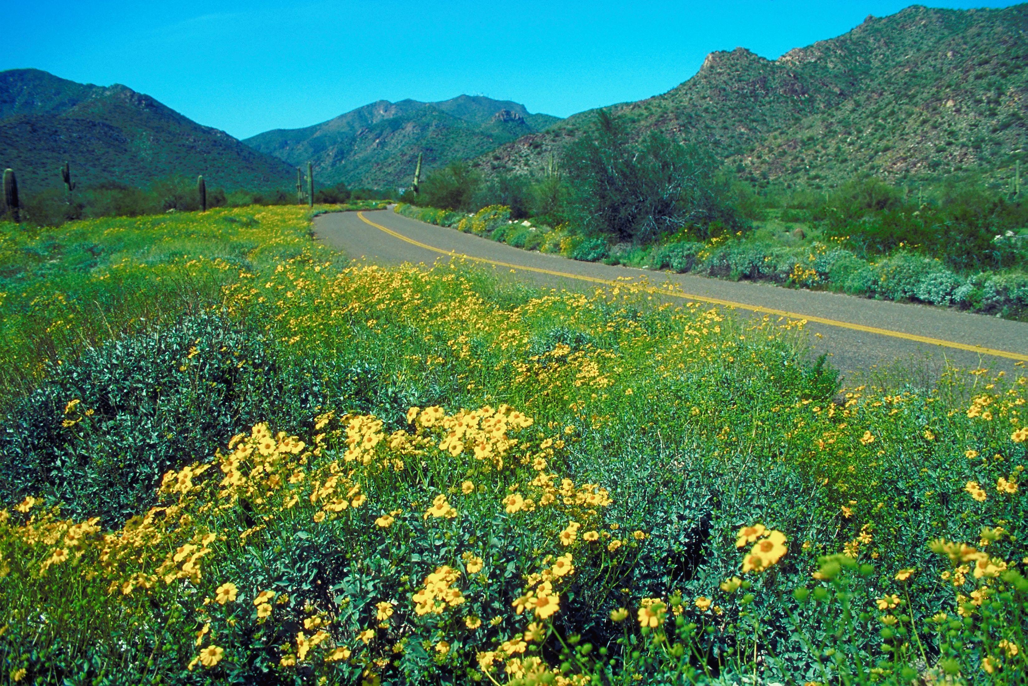 Hiking Trails In Anthem Arizona