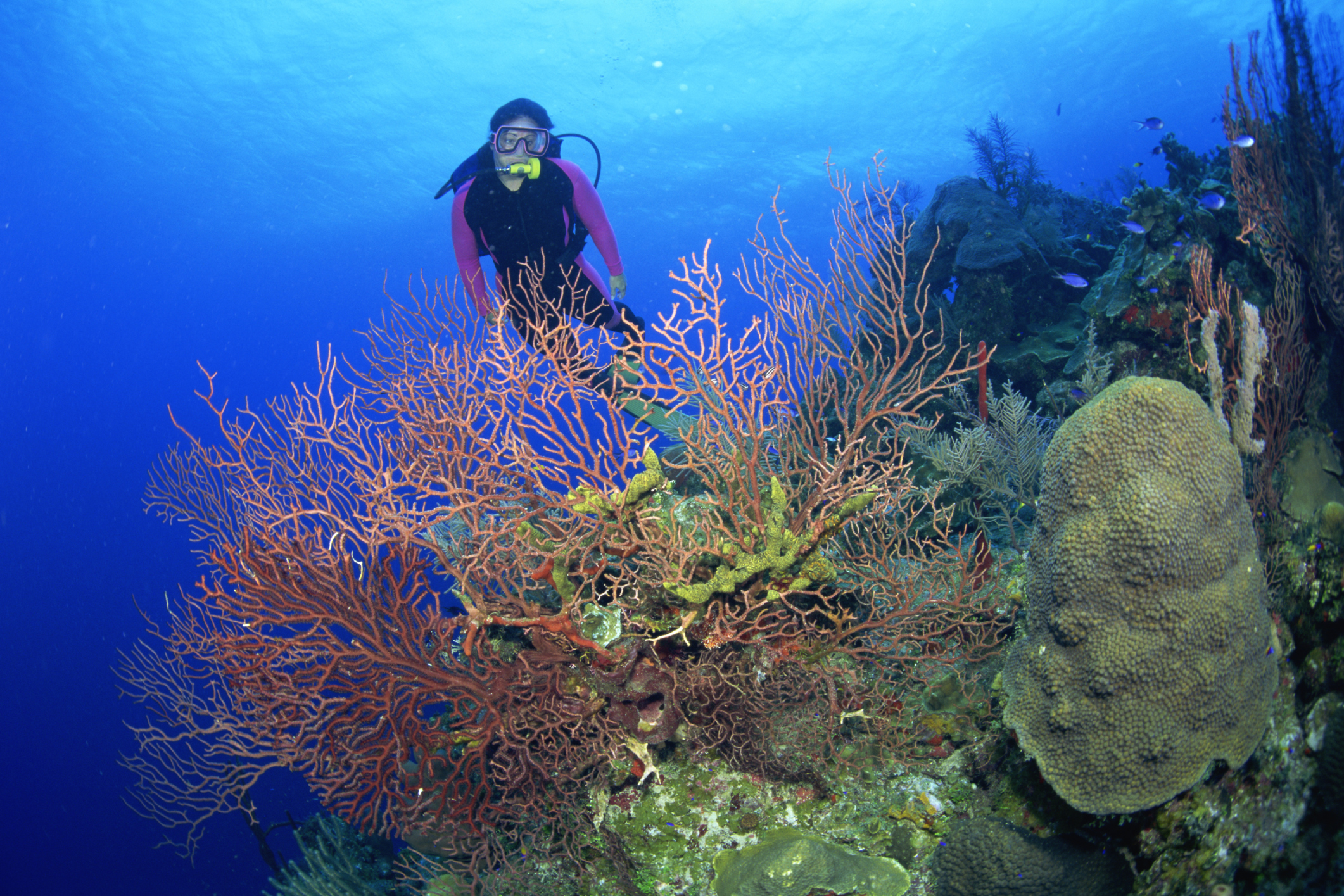 What Education Is Needed To Become A Marine Archaeologist