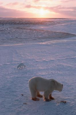 List of Endangered Animals in Alaska's Arctic Tundra | USA Today