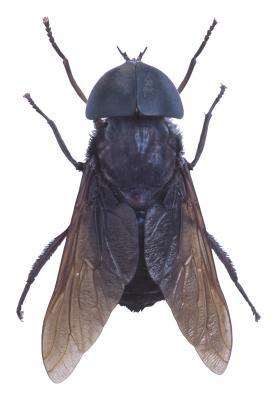 Maneras seguras y efectivas de matar mosquitos y peque as - Moscas pequenas cocina ...