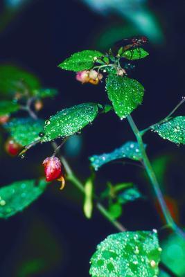 How Kill Little Black Flies In Houseplant Soil Home
