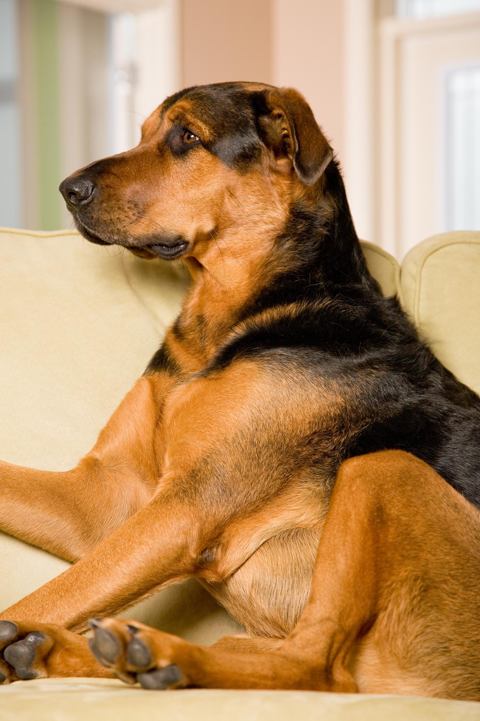 Regalos de condolencias para el dueño de un perro que ha muerto  