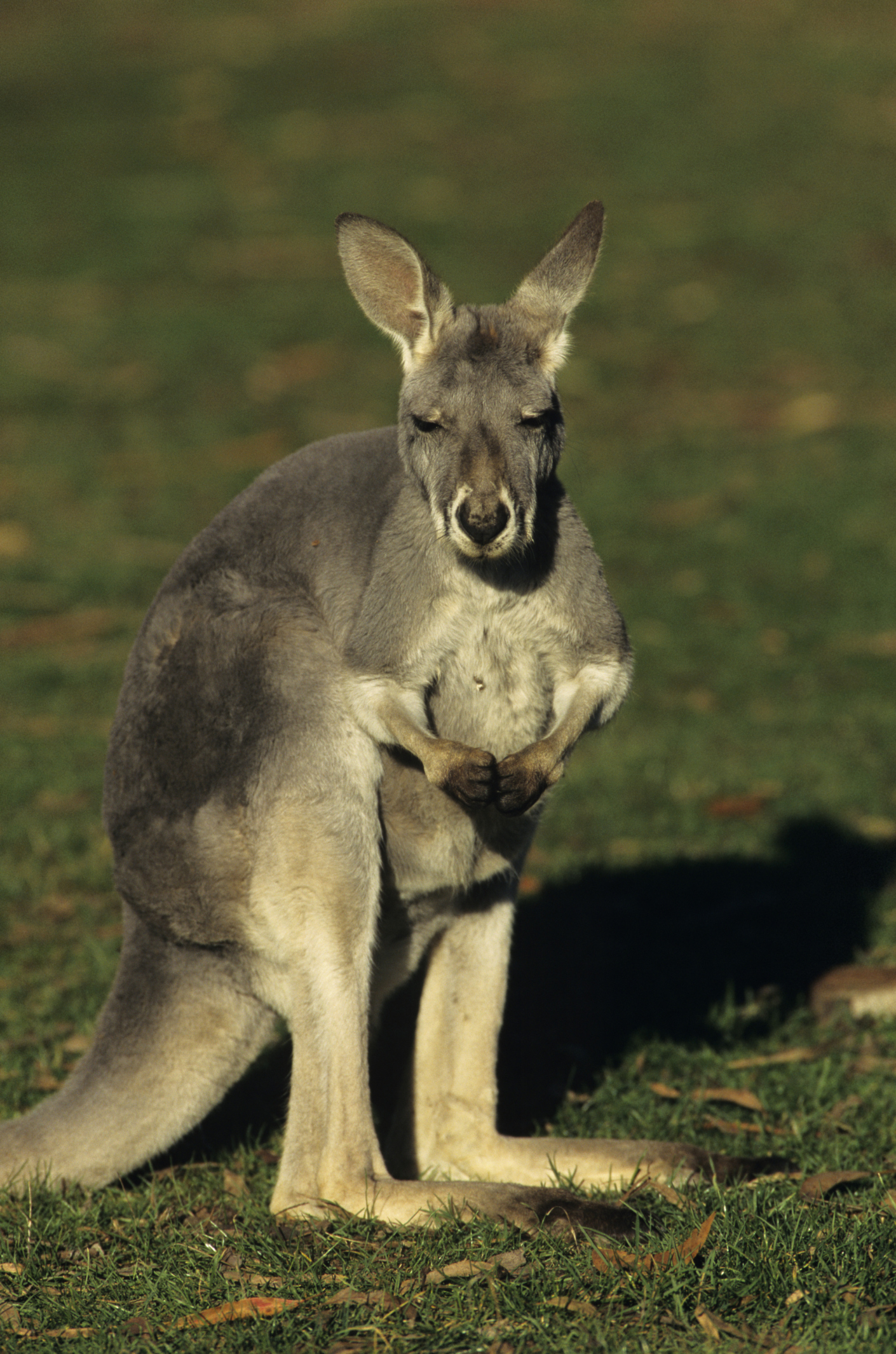 activities for preschoolers about kangaroos synonym