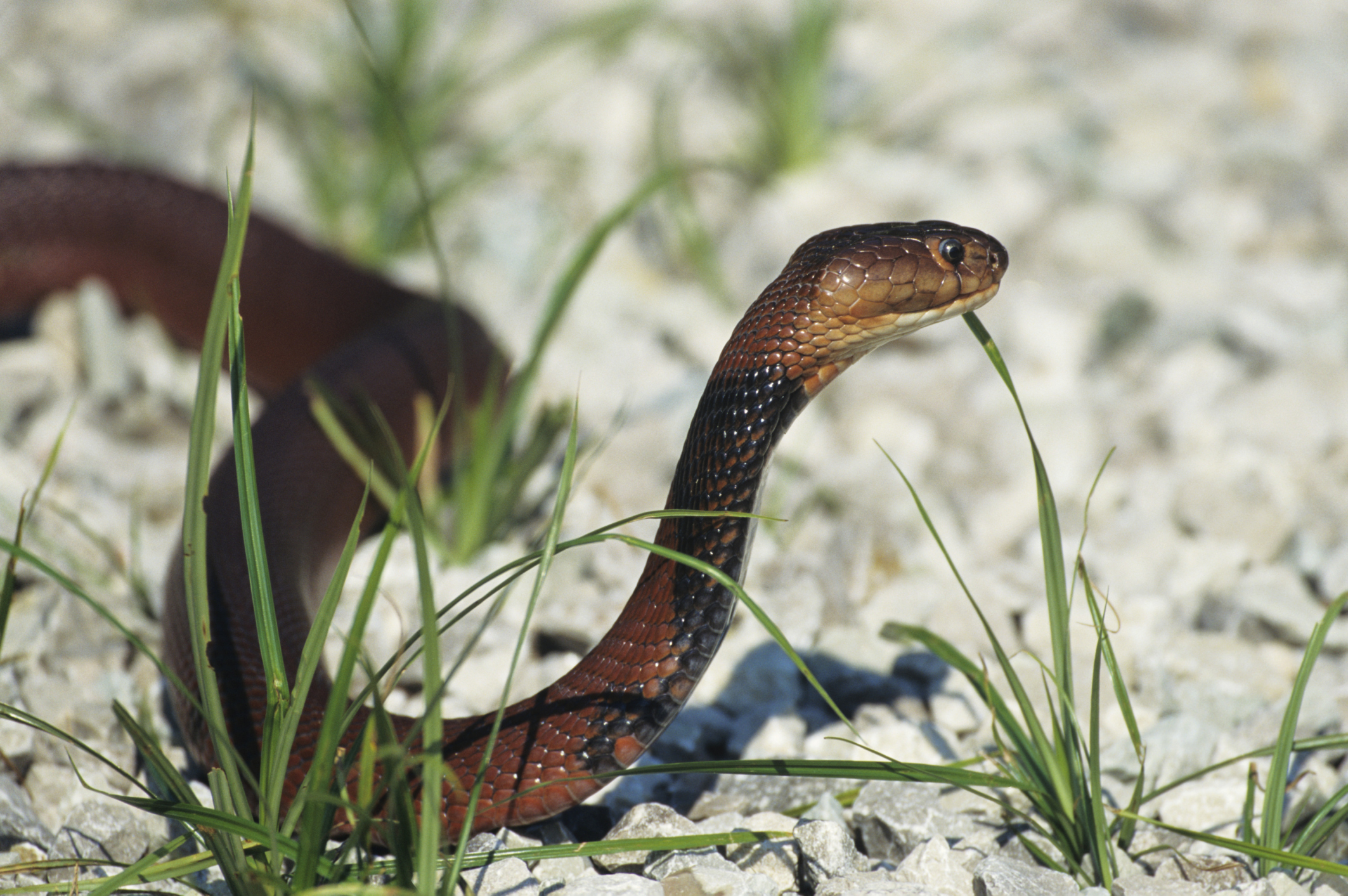 What Are Three Adaptations That Reptiles Have for Conserving