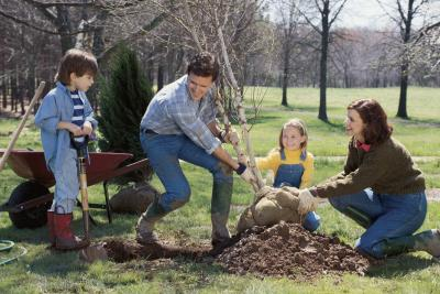 How to plant a mullberry tree home guides sf gate for Mullberry home