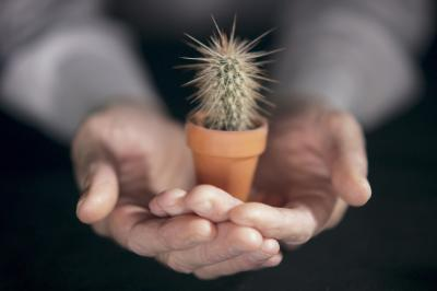 The types of small indoor cactus home guides sf gate - Small indoor cactus types ...