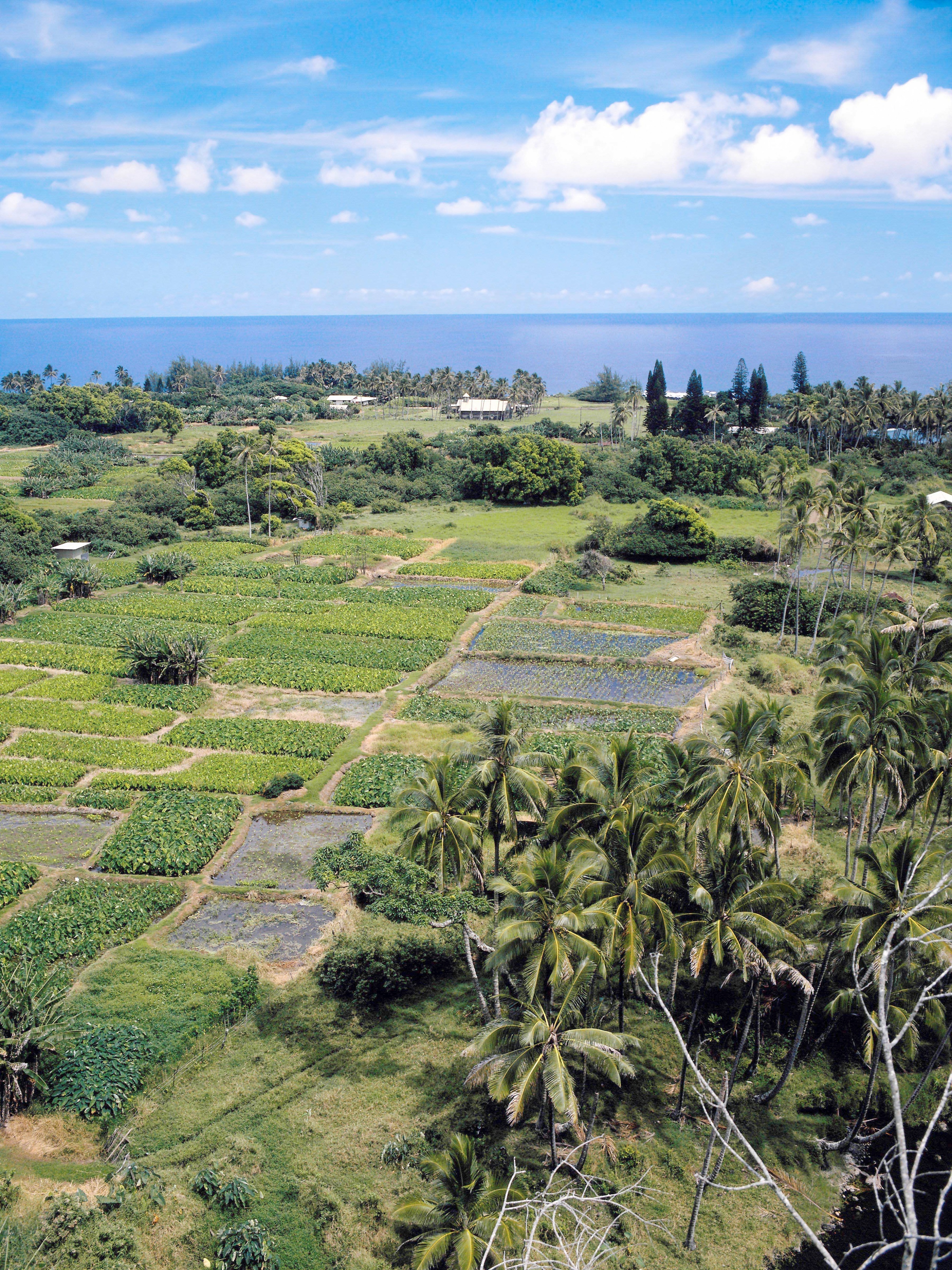 An Essay on Hawai`i's People – by Dr. Herb Barringer