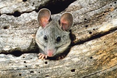 Do rats have eyelids animals for What fish has eyelids