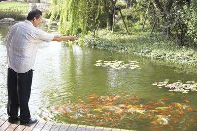 La clave para construir un buen estanque koi ehow en espa ol for Estanque para koi