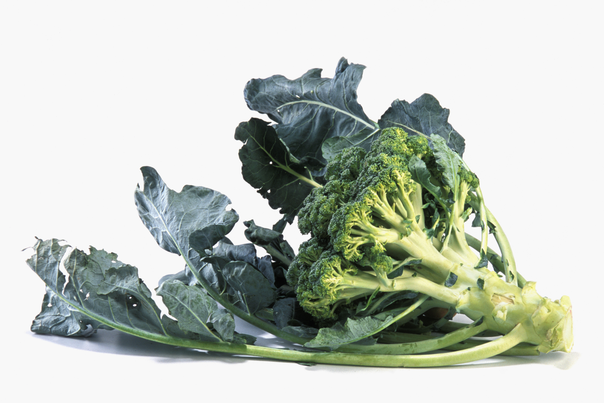 The stems of broccoli are also nutritious.