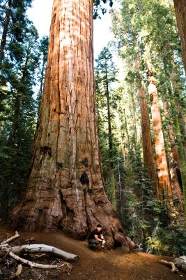 What S The Best Campground In Sequoia Usa Today