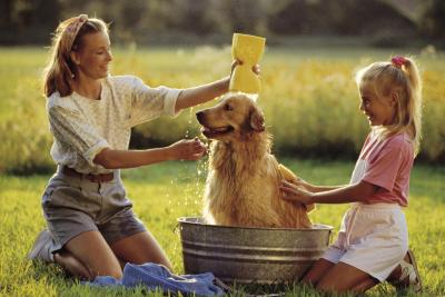 Properly bathing your dog can help reduce bad odors.