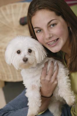 Characteristics Of A Maltichon Dog Care Daily Puppy