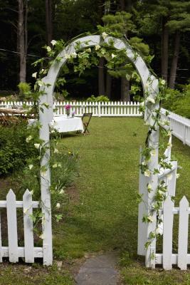Noninvasive Trellis Plants Home Guides Sf Gate