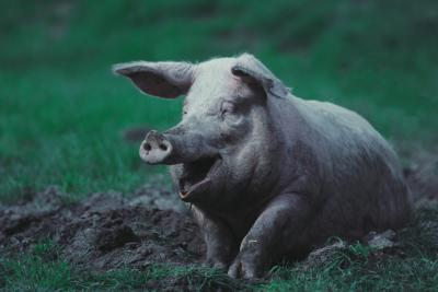 animal farm effective leader Animal farm essay 14 animal farm essay throughout history, leadership plays an effective role upon millions of citizens in the world most societies refer to a.