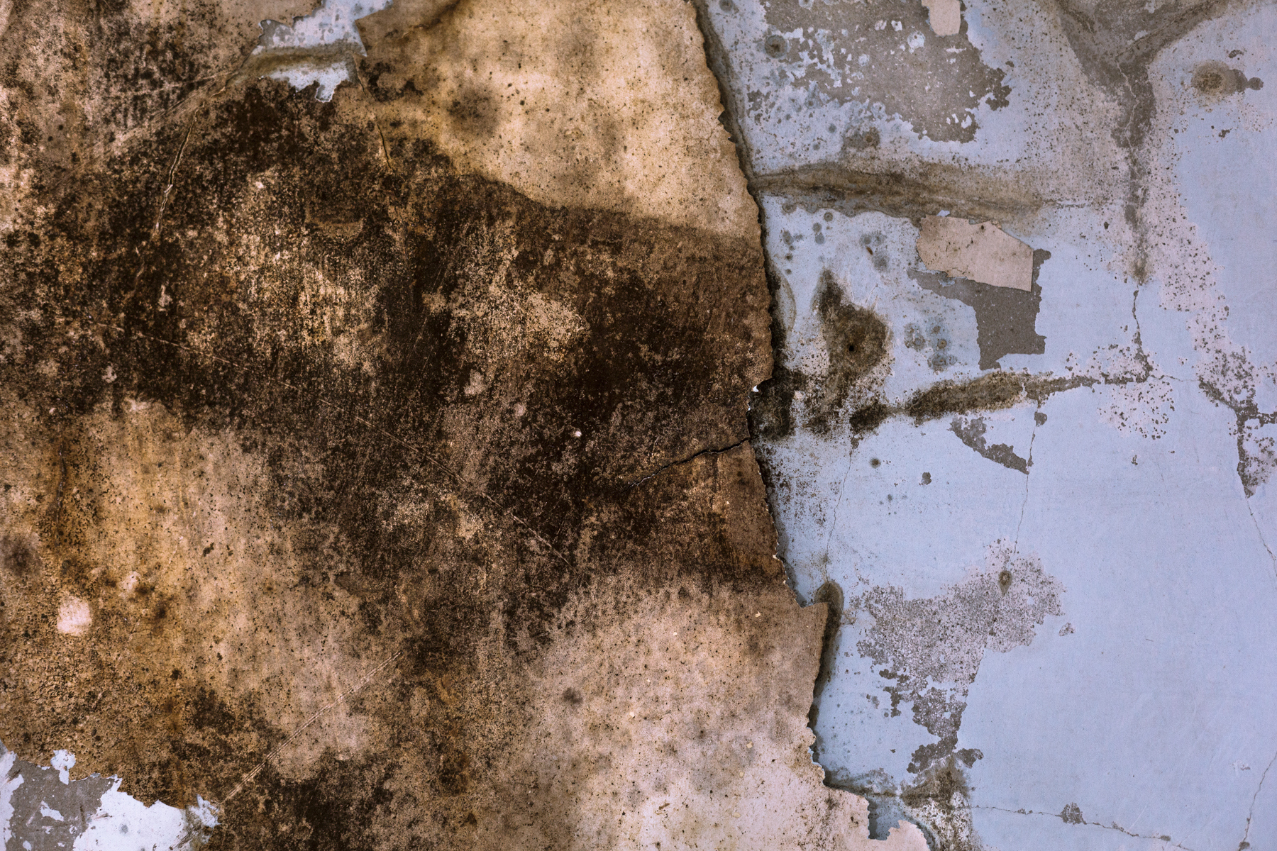 What Are the Dangers of Mold in a Basement