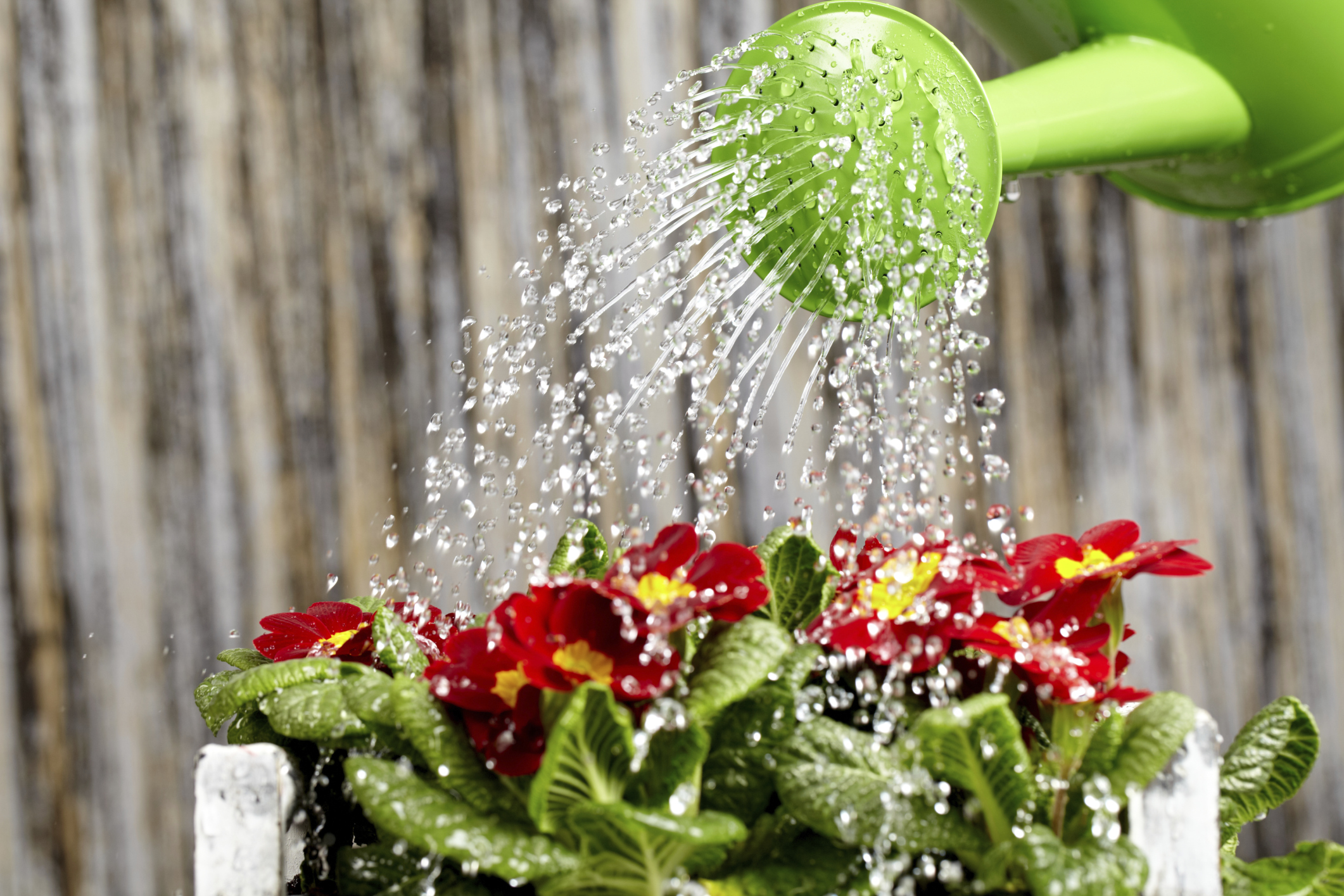 why is water important in living organisms essay Importance of biology: how the study of life affects ours  but how important is biology to our everyday routines, exactly  plants are living organisms just.