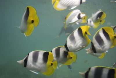 What does it mean if your fish isn 39 t eating animals for What does it mean to dream about fish