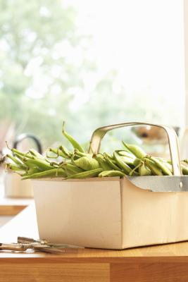 Why A Green Bean Plant S Leaves Are Turning Brown Home