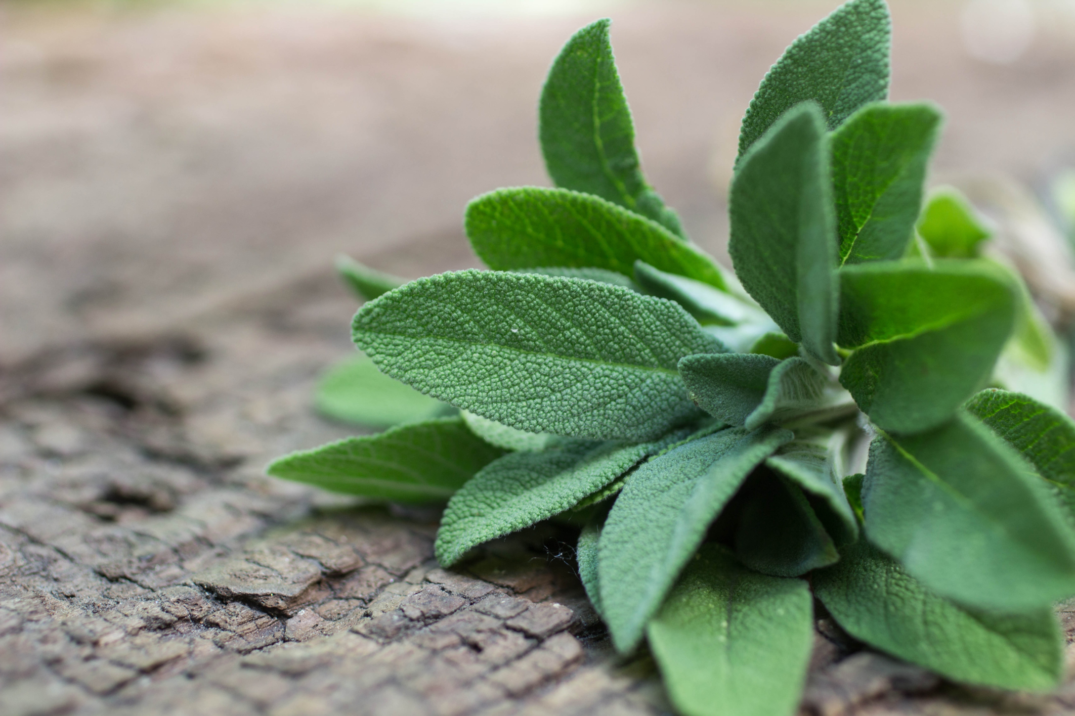 What Are the Health Benefits of Fenugreek & Thyme?