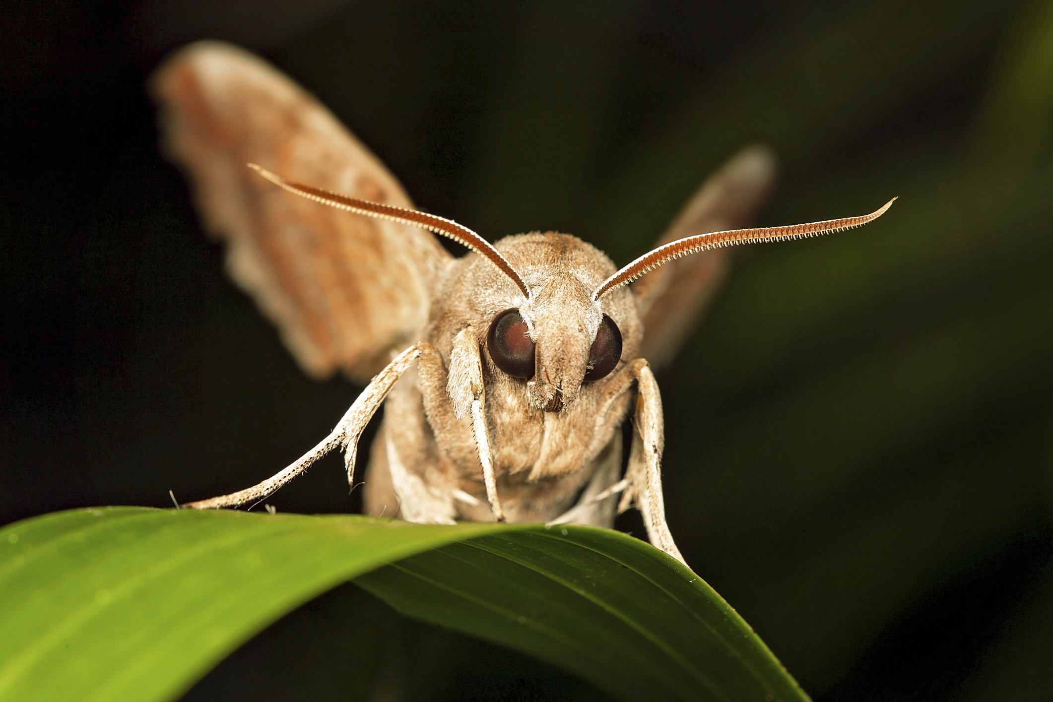 List of Nocturnal Flying Insects | Sciencing - photo#31