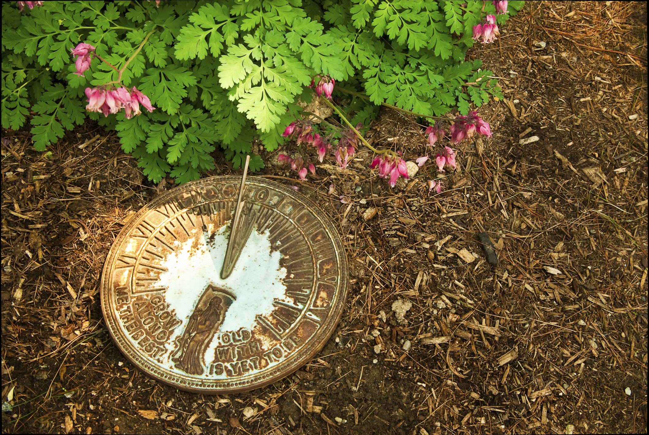 How To Get Mulch To Stay On A Slope Hunker