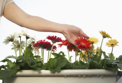 how to cut flowers from plant without damage