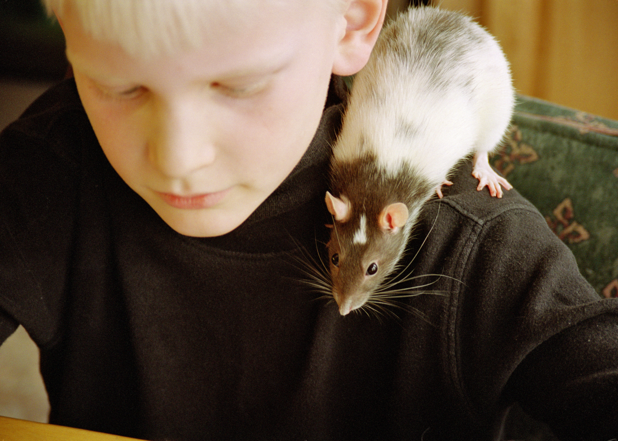 animal testing pros Free essay: pro animal testing animal testing has become a wide contribution in  medical field in order to find new treatment, developing new medicines and.