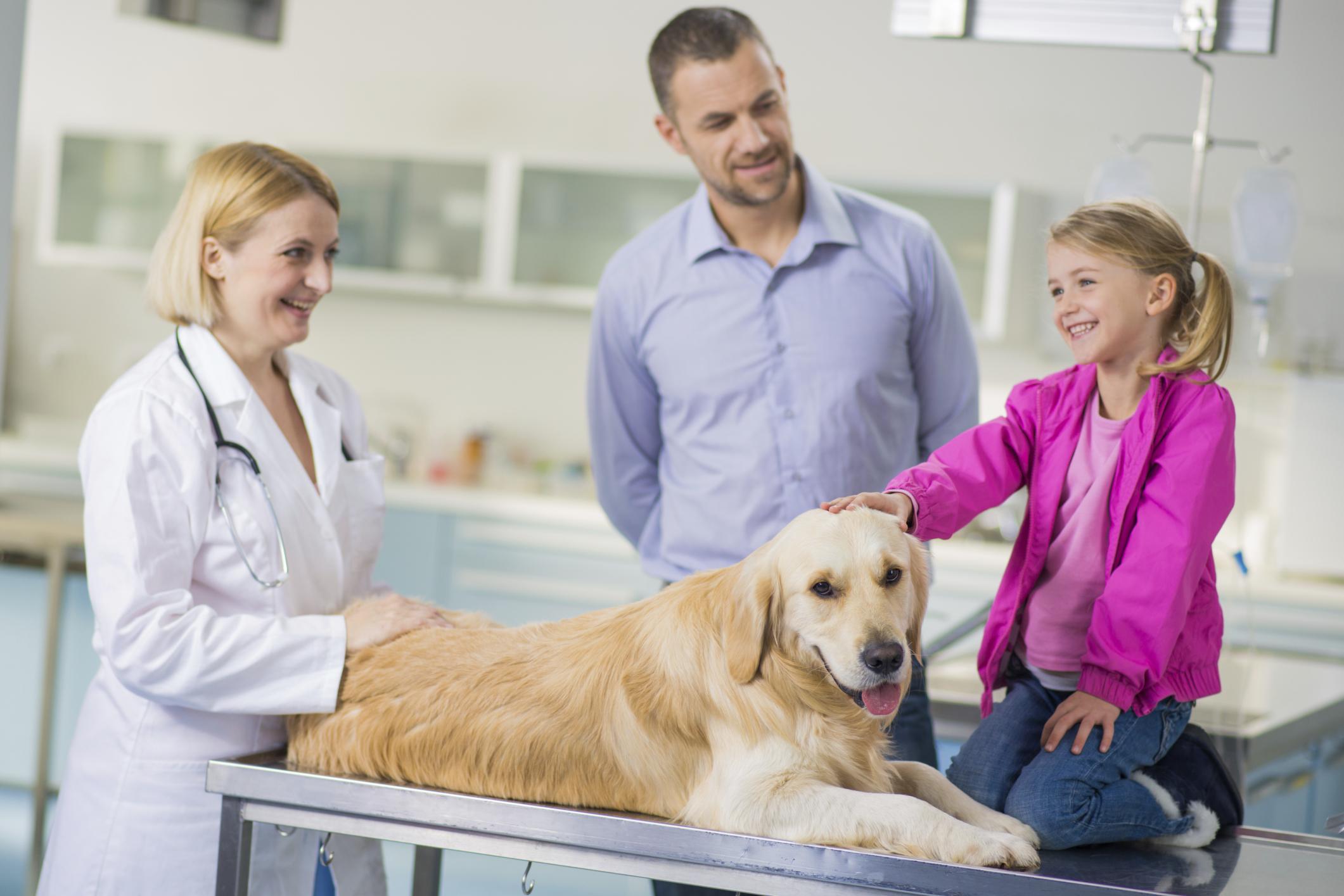 a career as a veterinary technician Find out about being a veterinary technician learn about job duties, salary, job outlook and educational requirements see what skills employers want.