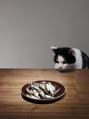 Can tuna fish cause crf in cats pets for Is tuna fish good for cats