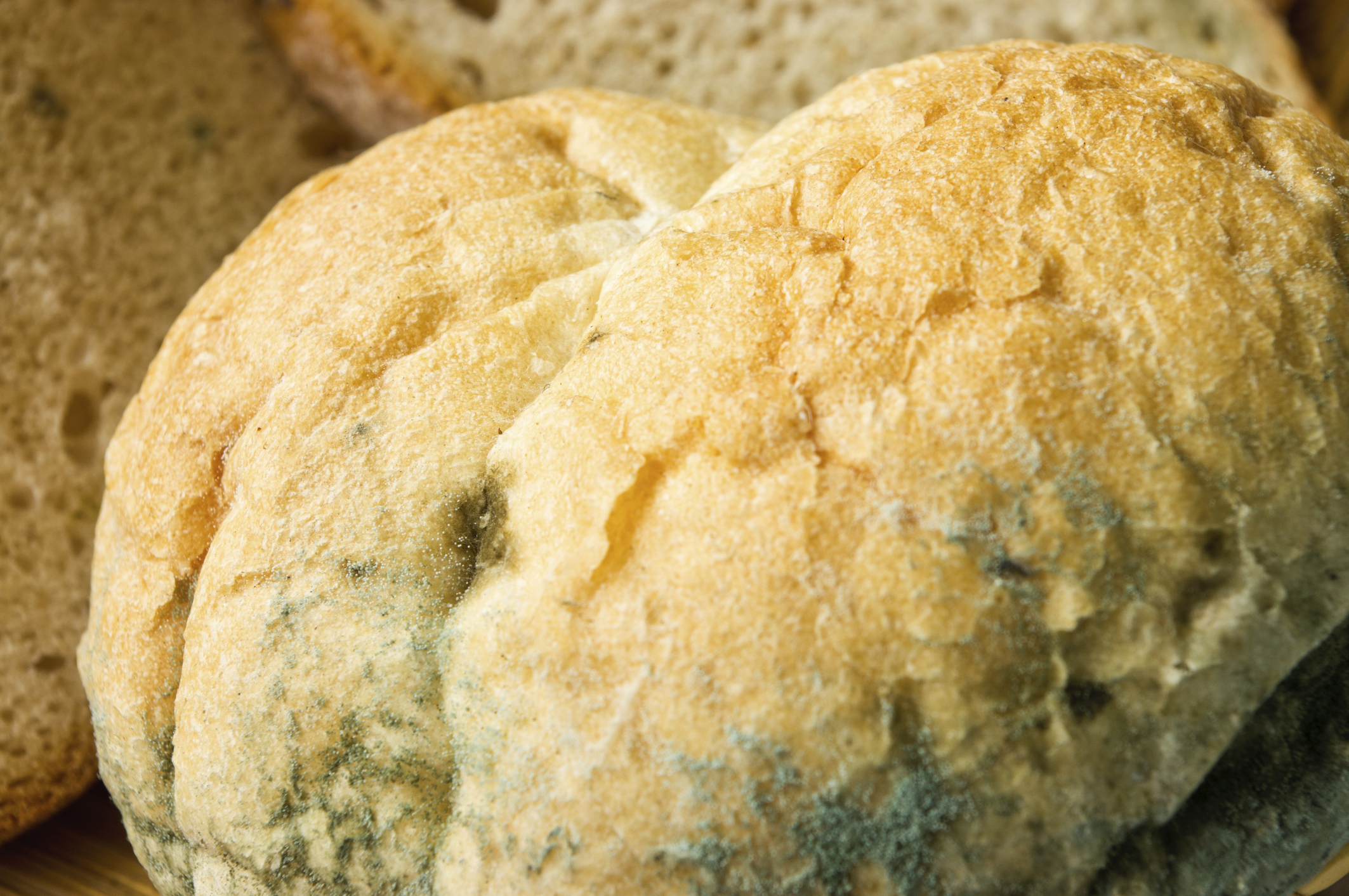 Will Eating Moldy Bread Make You Sick Healthfully