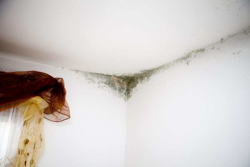 Is Bleach The Best Thing To Clean Mold Off Walls Home
