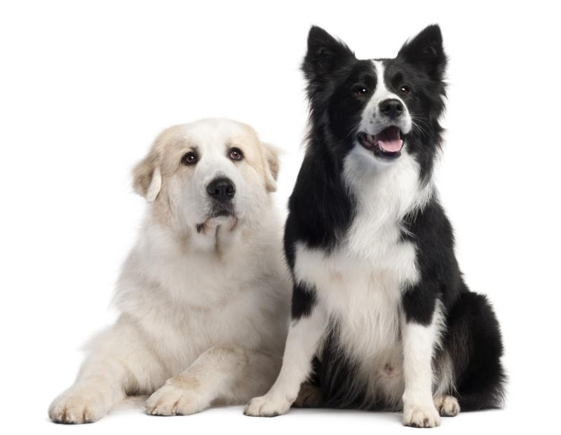 Food Guarding Between Dogs