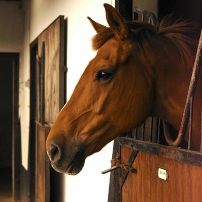 How To Make Money Off Of Horse Stables Chron Com