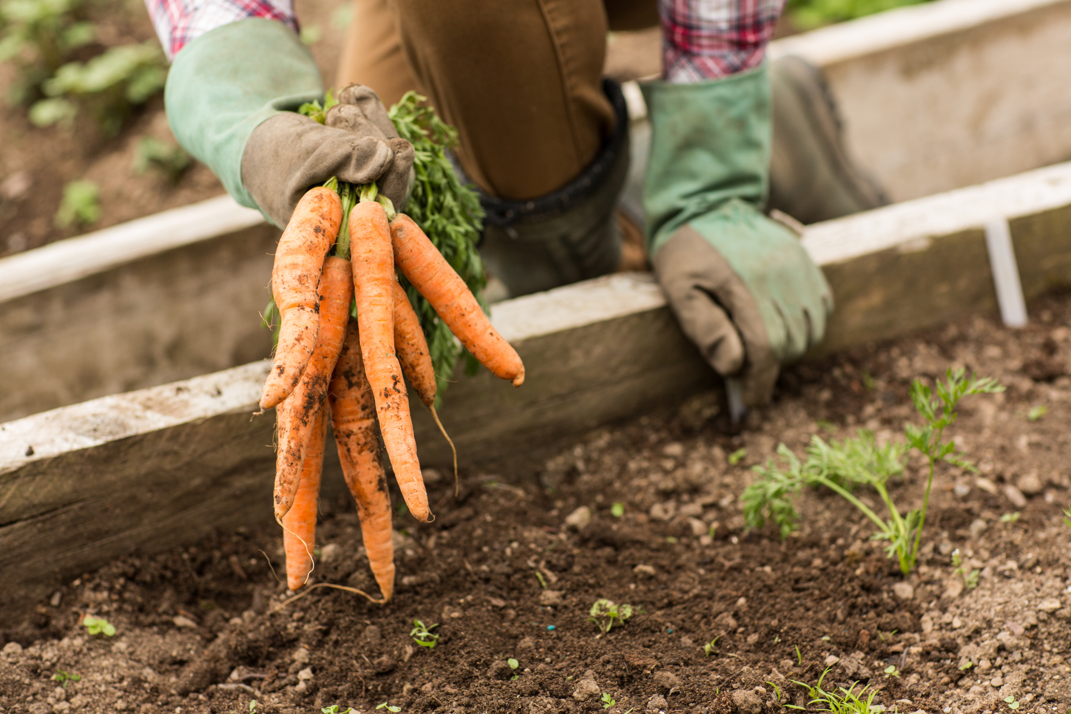 Pros & Cons of Growing Your Own Fruits & Vegetables | LIVESTRONG.COM