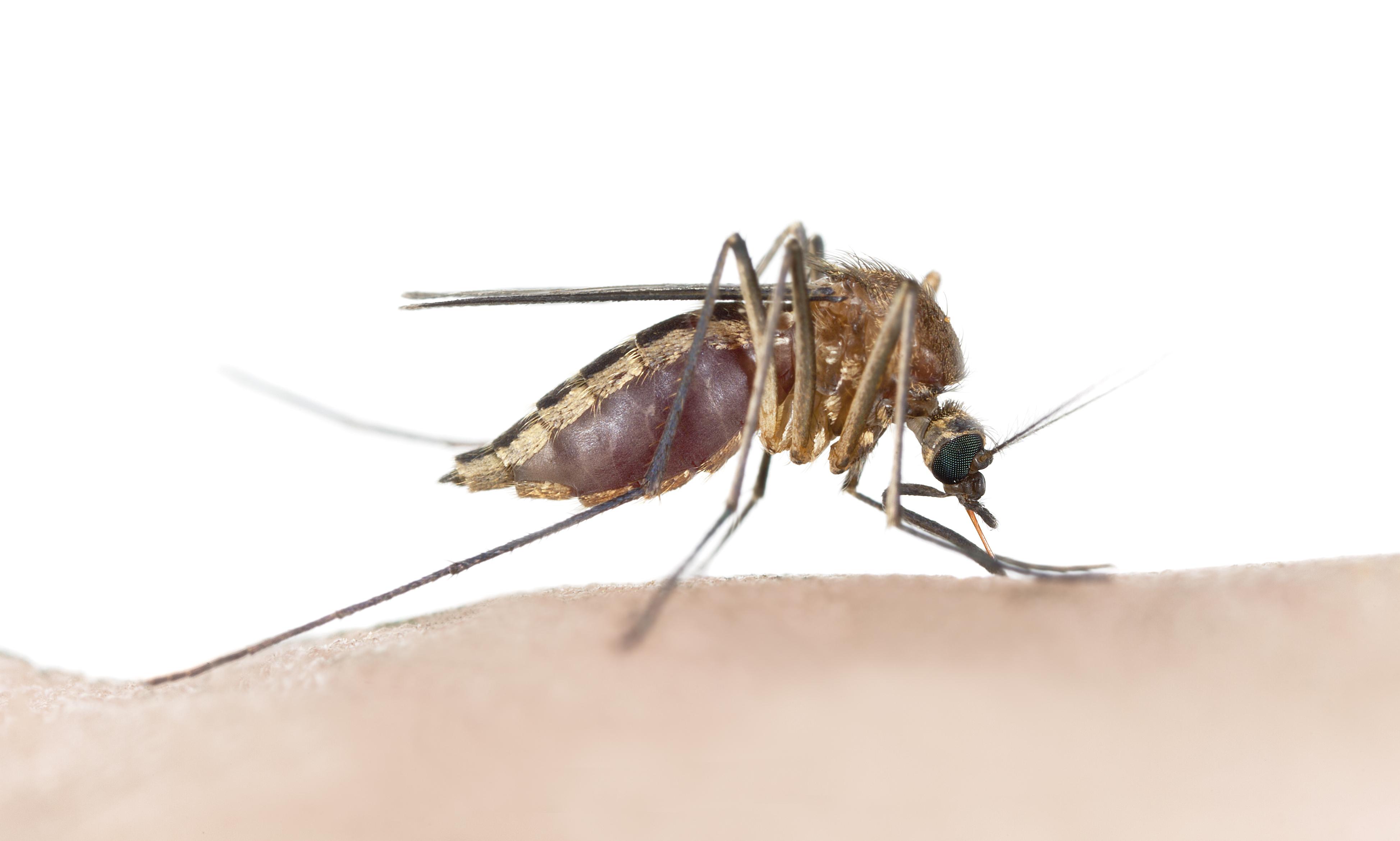 Bed bugs bites vs mosquito bites
