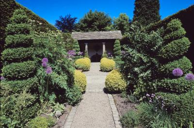 Good plants for landscaping a front yard home guides for Nice trees for front yard