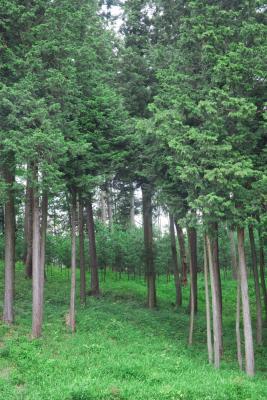 Is Cedar A Hardwood Tree Ehow Uk