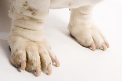 Can A Dog S Swollen Foot Be Related To Food