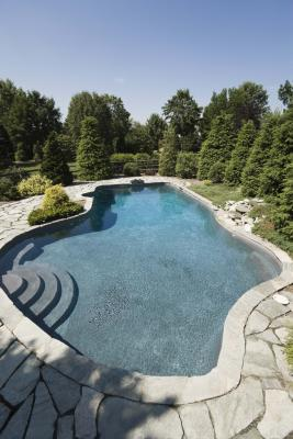 Evergreen Plants To Plant Near A Pool Home Guides Sf Gate