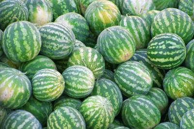 Ideas For Growing Personal Watermelon With Little Space