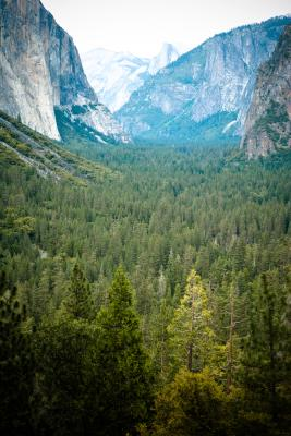 First Come First Serve Camping In Yosemite Getaway Tips