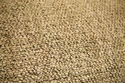 Rippled Or Buckled Carpet After Cleaning Home Guides