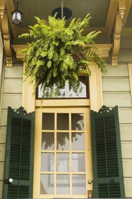 Hanging Plants For Low Light Home Guides Sf Gate