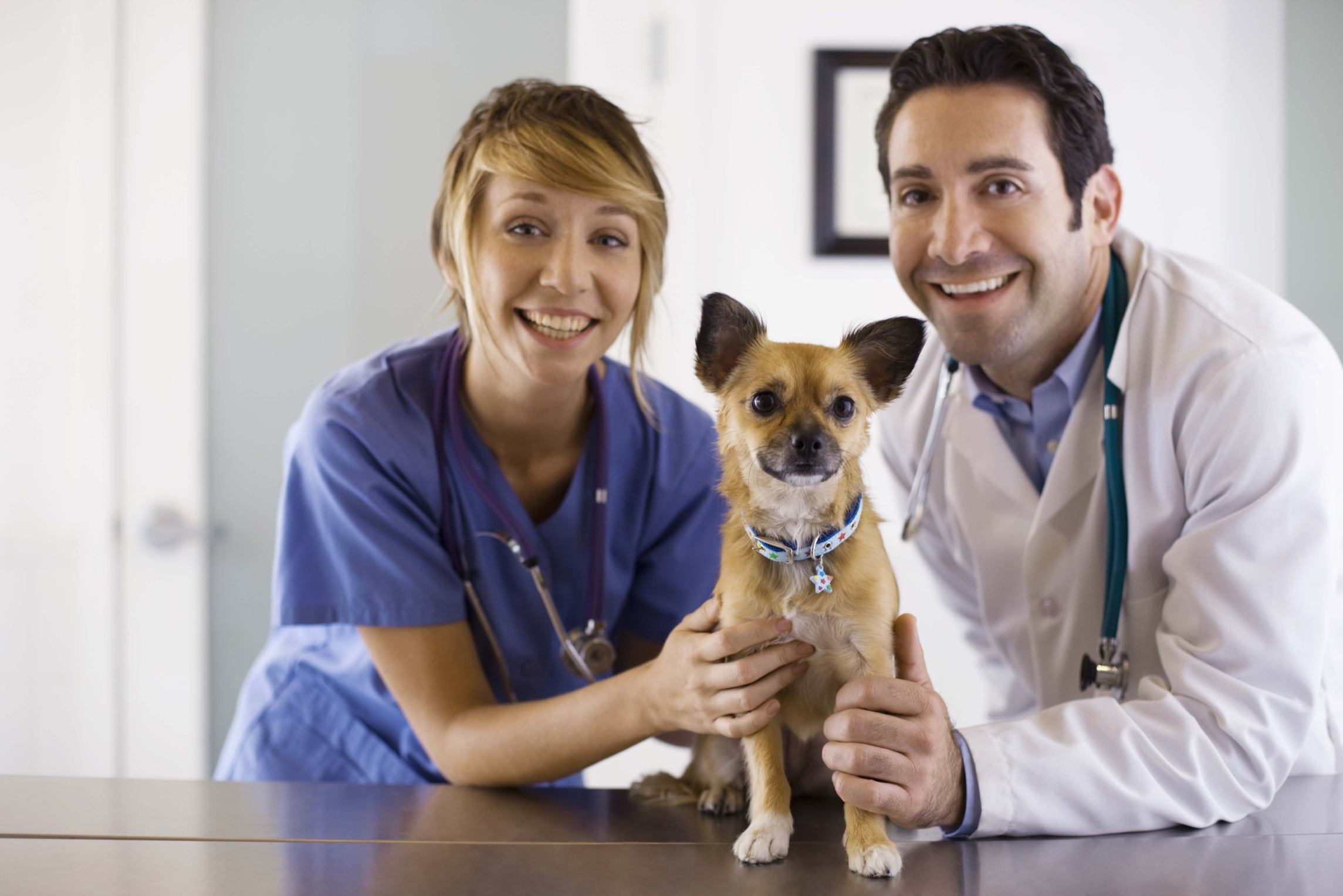 College Degrees For Dog Training