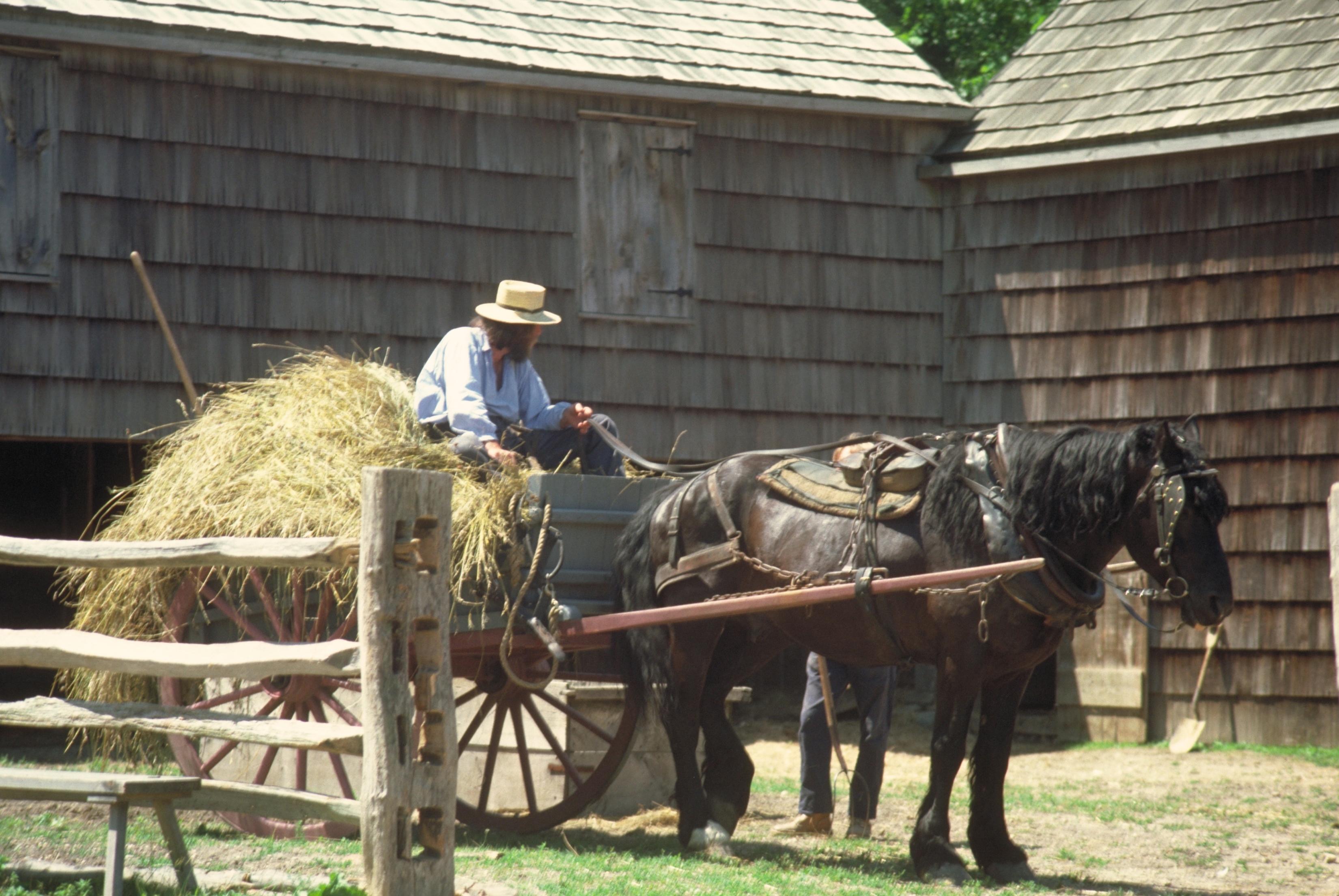 Amish & Domestic Animal Beliefs